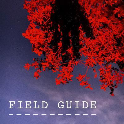 Field Guide: Night Sky