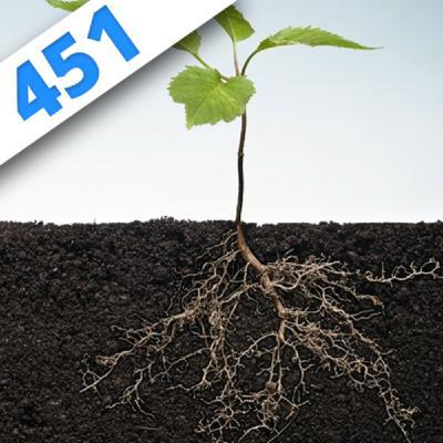 451 - Des racines et des plantes avec Guillaume Lobet