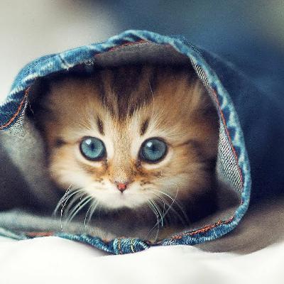 #162 Critical Thinking for Everyone! | Kittens, Consciousness  & Descartes| Sept. 9, 2021