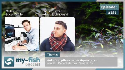 245: Aufsitzerpflanzen im Aquarium – Anubias, Bucephalandra, Farne & Co (Adrian Lichnowski)