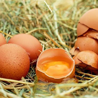 'Galinhas felizes': método amigável cresce com o consumo de ovos no país