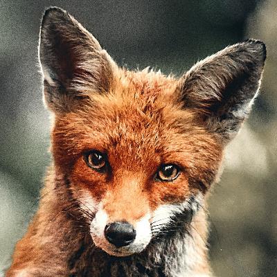 Sevencast #21 - Firefox Fortythree