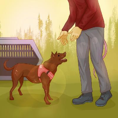 Гуманное воспитание собак — Лиза Дмитриева