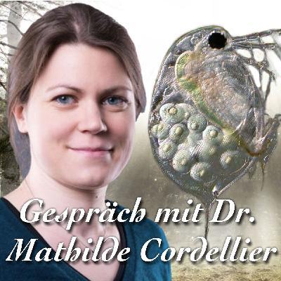 Unsterbliche Wasserflöhe - Dr. Mathilde Cordellier