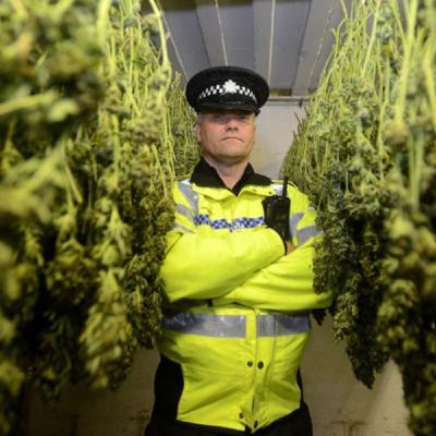 In Europa la guerra alla droga è una guerra alla cannabis
