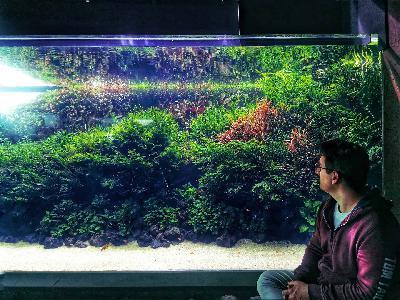 239: Der Erbsenkugelfisch – Alles über die Haltung und Pflege von Carinotetraodon travancoricus (Pascal Gräber)