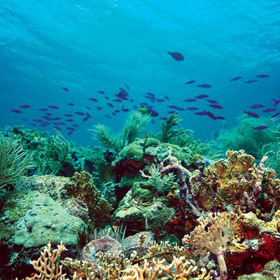 Buccoo Reef: Discover the hidden paradise the world has yet to discover