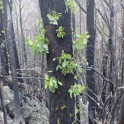 Episode 45: Wildlife conservation and bushfires