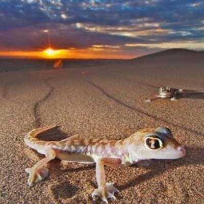 Desert Ecosystems with Dr. Sean Graham