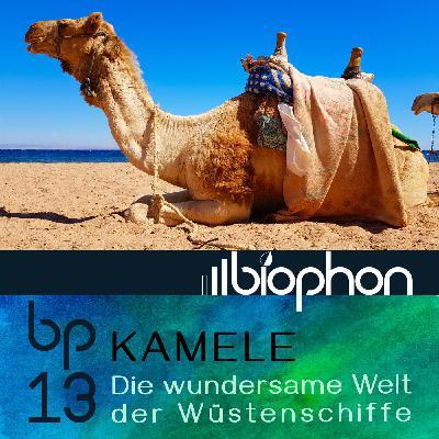 bp13: Kamele - Die wundersame Welt der Wüstenschiffe