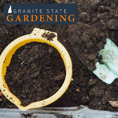 Soil Amendments, Ground Nesting Bees, Mountain Laurel and Finishing Compost