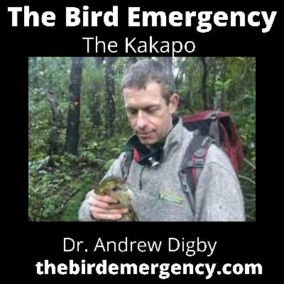 034 The Kakapo Recovery effort with Dr. Andrew Digby
