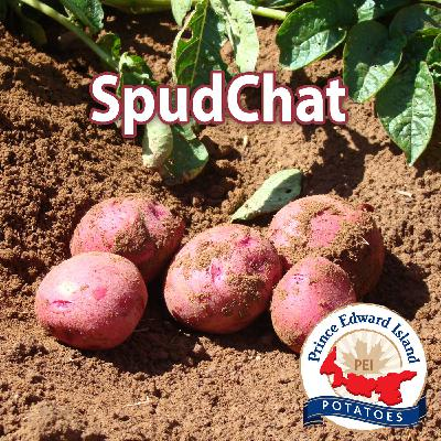 Welcome to SpudChat!