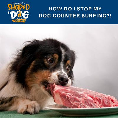 How Do I Stop My Dog Counter Surfing?!