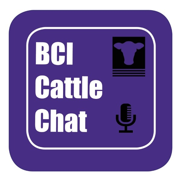 BCI Cattle Chat - Episode 48