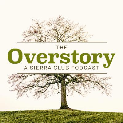 The Overstory: Coming Soon