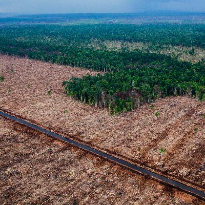 Mongabay Explores Sumatra: Deforestation demystified