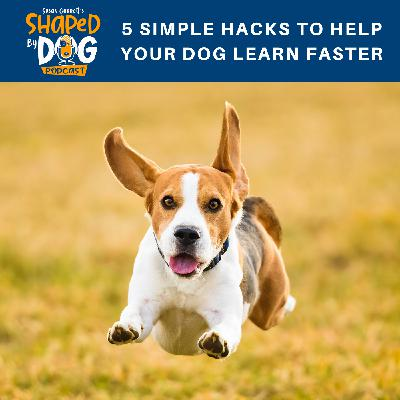 5 Simple Hacks to Help Your Dog Learn Faster