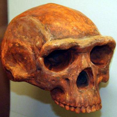 242 - Rep. Evolución Humana 2: Los Primeros Homo: Homo Habilis y Homo Erectus