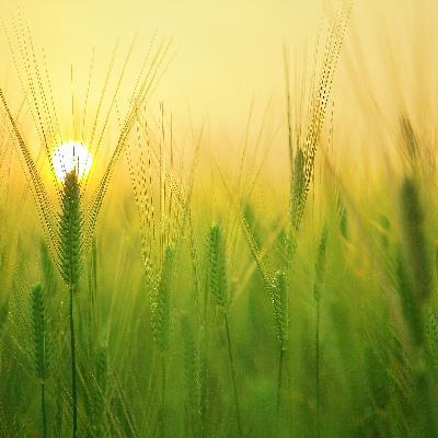 'Faltam insumos para a agricultura mundial'