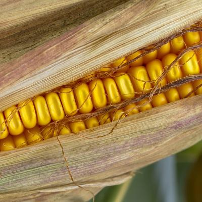 Episode 131: Part 2: The ABCs of GMOs