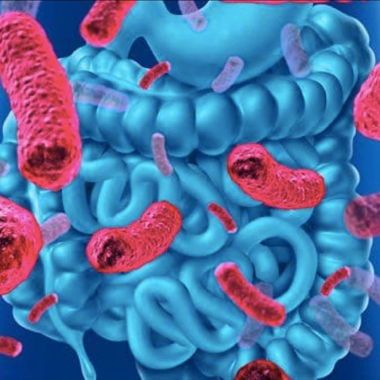 La Révolution Santé : Le Microbiote Intestinal