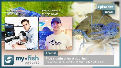 244: Flusskrebse im Aquarium – Procambarus erfolgreich pflegen und vermehren (Dennis Kraft)