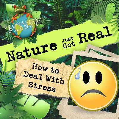 Ep #11 - How to Deal With Anxiety & Stress!