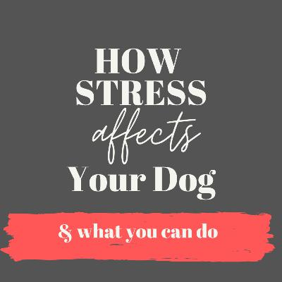 Stress: How It Affects Your Dog