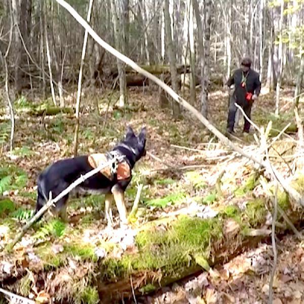 90: Cadaver Dog Results