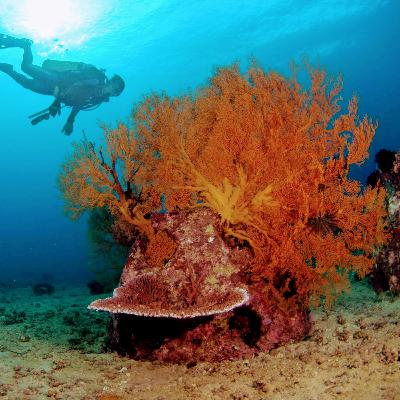 Restoring our oceans one Reef Ball at a time