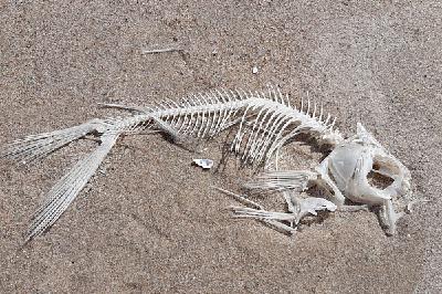 No jūras uz sauszemi jeb kā dzīvajām radībām pieauga kājas