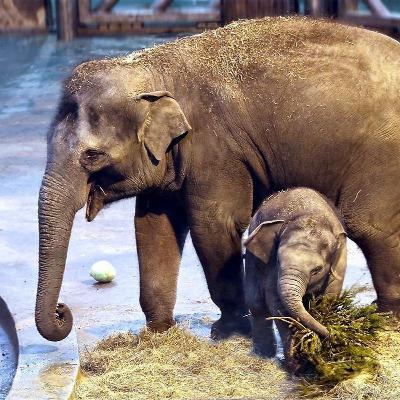 Когда появились зоопарки в России