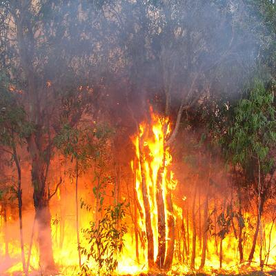 Andrew Houley From Mackay RFS On The Fires Currently Burning In Mackay & The Whitsundays