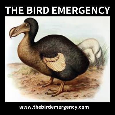 051 Aussie Backyard Bird Count 2020 Results with Tegan Douglas Part 1