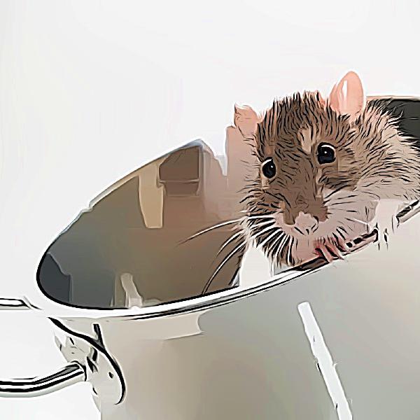 No. 28 - Tem um rato na cozinha | Sobre lidar com o indesejável