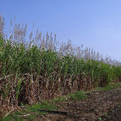 3º Levantamento de Safra da Conab mostra virada nos mix de produção no Brasil