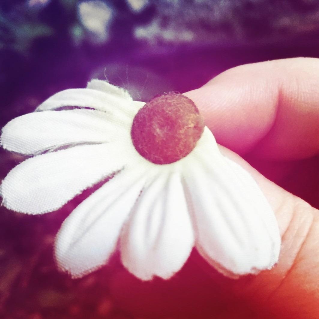 A nossa flor, que desabrochou e depois morreu