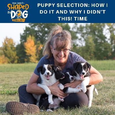 Puppy Selection: How I Do It and Why I Didn't This! Time