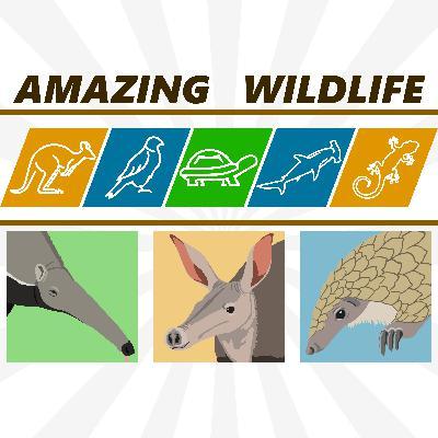 Anteaters | Aardvark | Pangolins