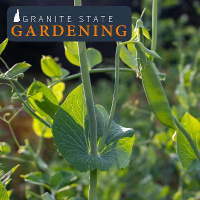 Growing Cool Season Vegetables in your Spring Garden