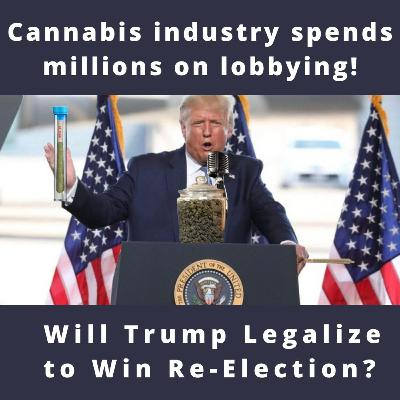 Lobbying for Legalization: Will Trump Legalize Cannabis to Win Re-Election?