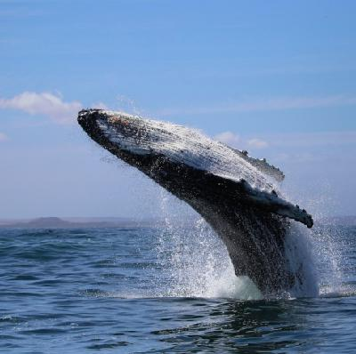 Singing cetaceans: New whale & dolphin recordings intrigue researchers
