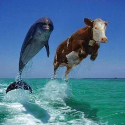 """Odc.7 Meksyk """"Pierwsza krowa na pokładzie statku, w podróży do Ameryki"""""""
