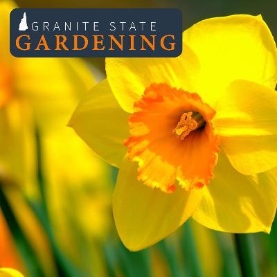 Fall Gardening for Rewards Next Year: Bulbs, Garlic and Lawns