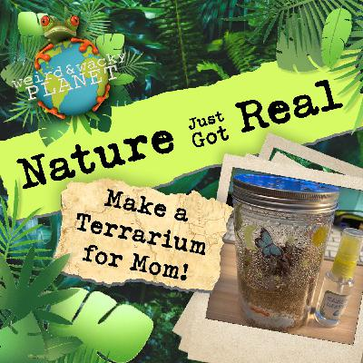 Ep #7 - Make a Terrarium for Mom!