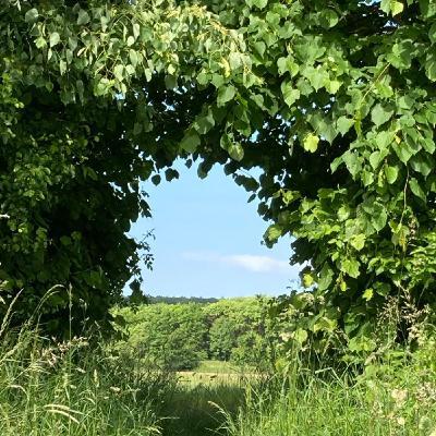 Back in Burgenland - Forestpod