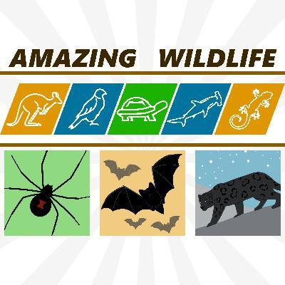 Spiders | Bats | Snow Leopard