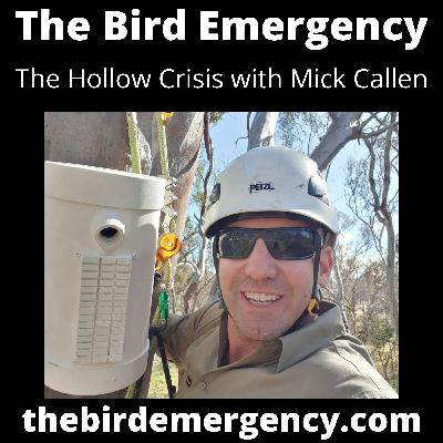 041 The Hollow Crisis with Mick Callan