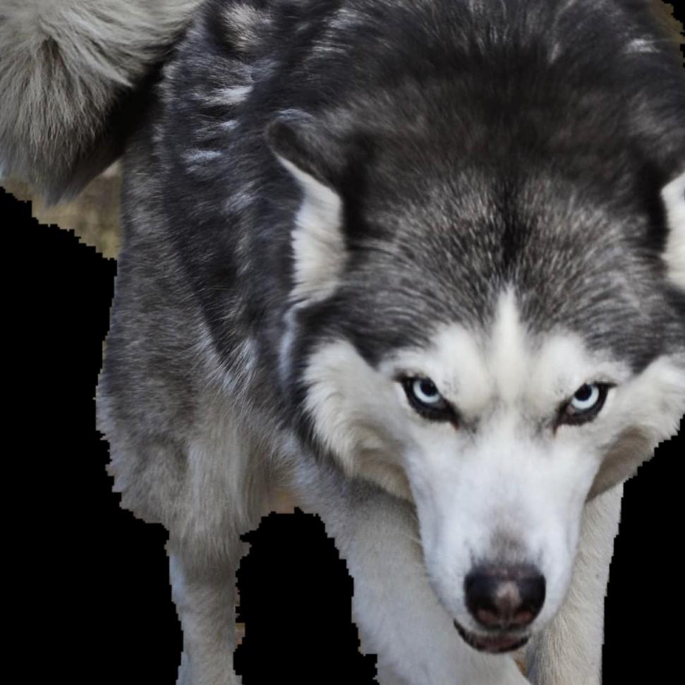 #live HowlWulf: Meta-Platsky:PROLOGUE